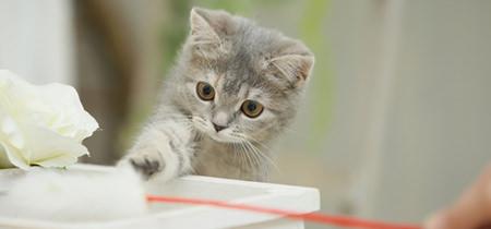 猫の飼い方