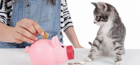 猫にかかるお金