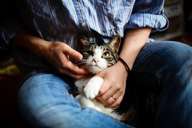飼い主に爪とぎをしつけられている猫