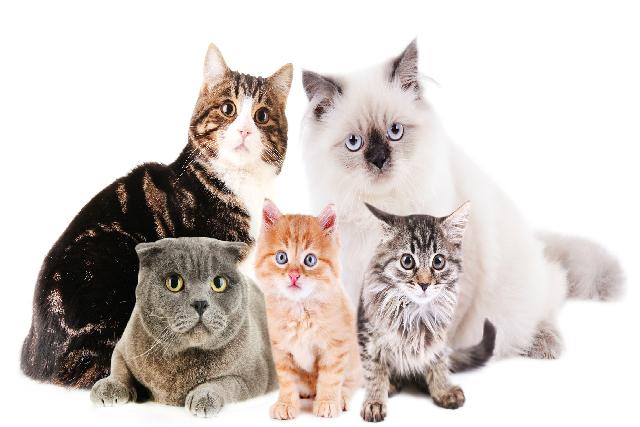 飼いやすい猫たち