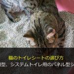 猫のトイレシートの選び方 汎用型、システムトイレ用のパネル型シート