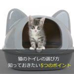 猫のトイレの選び方 知っておきたい5つのポイント