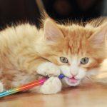 猫の異物誤飲  身近に潜む猫の誤飲・誤食事故の症状・治療・予防と危険な食べ物まとめ